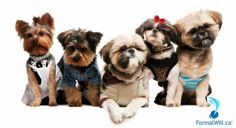 """Who is going to look after Fido when you're gone? A Pet Will™ Agreement ensures that your pets are looked after by the appropriate people. Learn more by clicking on the """"Visit"""" tab above."""