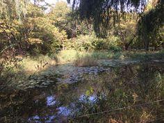 여의도 공원 자연생태의 숲에 있는 작은 호수. 새벽에 동물 생물들은 눈 비비고 일어나 세수하러 왔다가 물만 먹고 가리라.