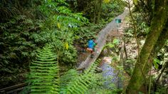 Daytrip to Ngaruawahia: Hakarimata Summit Track will test your stamina