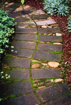 I would plant a creeping mint or lavender every foot to so to release scent on a scarcely trodden path