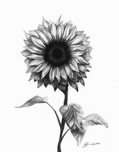 Image result for realistic sunflower drawing