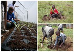 Jeden by neveril, aký význam majú stromy v živote človeka. Výsadba sadeníc v okolí Mau Forest pomáha miestnym obyvateľom spravovať miestne lesné plochy a drahocenné vodné zdroje.  Miestna komunita sa postupne zbavuje závislosti na výrube dreva a tradičných zdrojoch obživy, pričom sa oboznámia s včelárstvom a chovom kôz a oviec. Využívaním úsporných piecok sa im podarí znížiť spotrebu dreva v domácnosti až o 1/3, čím šetria nielen les, životné prostredie ale aj svoju peňaženku!