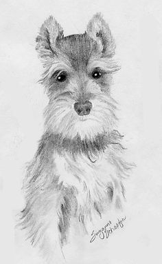 how to draw a schnauzer - Google Search