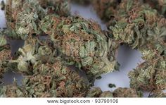 Macro of Medicinal Marijuana on Budproducts.us