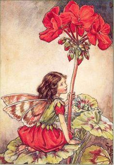 Un bello geranio es ¡mi sombrilla para el sol...