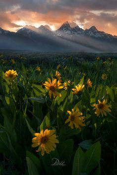 Spring Splendor (Tetons, Wyoming) by Perri K Schelat / 500px