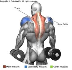 TRAPS -  DUMBBELLS SHRUGS