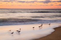 Ghostly Seabirds by Nadeen Flynn, posted on the CMPro Daily Project  |  nadeenflynn.com