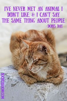 I've never met an animal I didn't like; & I can't say the same thing about people quote by Doris Day. Quotes about the love and wonder of animals! #AnimalQuotes #CatQuote #Animals #Cats