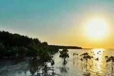 Pantai Morosari (Mangrove)
