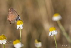 Mariposa y margaritas -