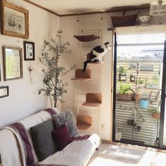 small-cat-playground-designs-in-living-spaces - Beth Gibbs - small-cat-playground-designs-in-living-spaces 30 Modern DIY Cat Playground Ideas In Your Interior Cat Playground, Playground Design, Playground Ideas, Modern Playground, Cat Wall Shelves, Shelves For Cats, Cat House Diy, Tiny House, Diy Cat Tree