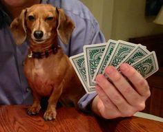 P-p-p-poker face