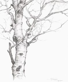 Tree Drawing. This makes me want to break out the old sketchbook and just get lost in the lines of nature!:
