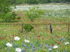 spring in South Texas