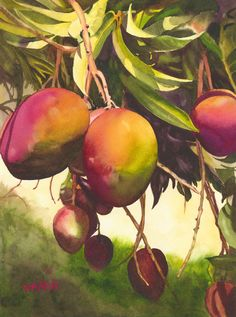 28 Ideas mango tree watercolor for 2019 Watercolor Fruit, Watercolor Paintings, Tree Paintings, Tree Silhouette Tattoo, Willow Tree Tattoos, Mango Tree, Tree Photography, Blossom Trees, Realistic Drawings