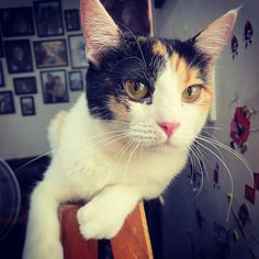 When your cat demands your attention. Feeling Lonely, Cat Facts, Snoring, Cool Cats, Cats Of Instagram, Funny Cats, Cat Lovers, Dog Cat, Kittens
