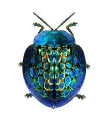 Картинки по запросу wonderful blue cicada