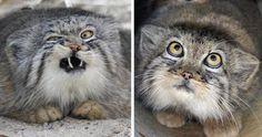 Schon wieder Katzenbilder
