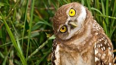 In conclusion: Owls are no longer putting up with your shit, yo. | Community Post: 20 Owls That Can't Get Any Respect