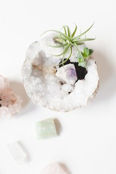 crystal planters with air plants and succulents