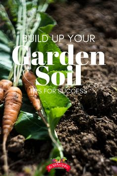 Use these tips to help improve garden soil to grow healthier plants and lusher lawns. Vegetable gardens, flower gardens, and lawns can all benefit from rich soil that is full of microbes and organic matter. Gardening For Beginners, Gardening Tips, Lush Lawn, Herb Garden Design, Soil Improvement, How To Grow Taller, Organic Matter, Garden Soil, Growing Vegetables