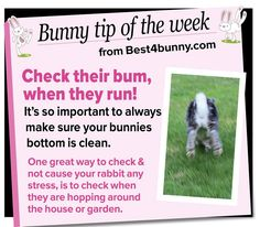 Bunny tip - Check their bum when they run! www.best4bunny.com