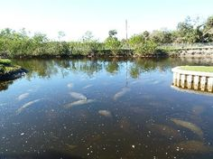 Gotta visit Manatee Park in Ft. Myers- fabulous place to see these amazing creatures!