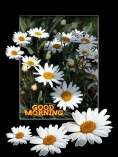 Good Morning صباح الخير. Buongiorno Bonjour. Günaydın. Free Good Morning Images, Good Morning Images Flowers, Good Morning Beautiful Images, Good Morning Gif, Good Morning Picture, Good Morning Greetings, Morning Pictures, Beautiful Pictures, Flowers Gif