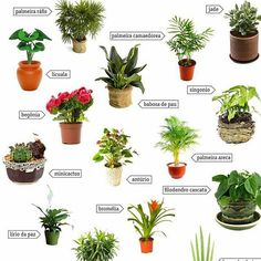 Essas algumas plantinhas que pode ser criadas em apartamentos, são ideais para ambientes internos. Deixam a casa mais alegre e viva!!! Fonte: dobraoficina.com #pequenoap_107 #plantas #decoracao