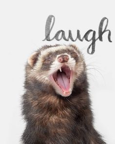 """If laughter is the best medicine, then ferrets are the best doctors! What are some of the funniest things your """"doctor"""" does? Share…"""