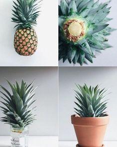 #DIY #pineapple #Plants www.kidsdinge.com http://instagram.com/kidsdinge…
