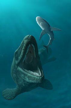 Mosasaurus maximus