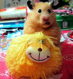 Unexpectedly Funny Things to do with Hamsters When You're Bored | The Ark In Space