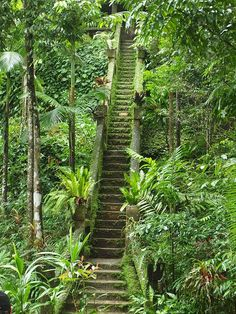 This staircase is part of the ruins of a Spanish style castle built into the rainforest near Innisfail an hour south of Cairns in Queensland, Australia Queensland Australia, Australia Travel, Western Australia, Cairns Queensland, Melbourne Australia, The Places Youll Go, Places To See, Beautiful World, Beautiful Places