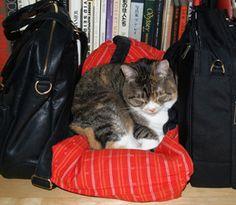 最近のみるくのお気にの場所。 両側に鞄を置いてもらって 真ん中に私の半天(←返してくれない)を敷く。 狭さと暖かさと、なんとなく安心する匂いが良いようで……。 まあるく鎮座ましまし、時折なでてくれと要求。