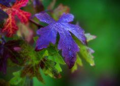Fall Colours by Alida Jorissen on 500px