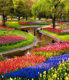 Lovely Tulips, Serpent Garden - Japan