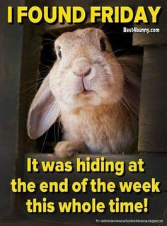 Best 4 Bunny has links to the best rabbit-related products to save you the time and trouble Friday Meme, Its Friday Quotes, Baby Animals, Funny Animals, Cute Animals, Funny Animal Pictures, Funny Images, Sports Pictures, Funny Pics