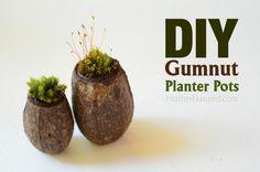 DIY gumnut planter pots that will make you squeal - Mother Natured Baby Crafts, Crafts For Kids, Christmas Decorations Australian, Earth Day Activities, Driftwood Sculpture, Craft Corner, Garden Pots, Garden Ideas, Nature Crafts