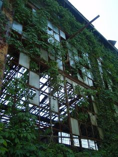Ivy covered abandoned warehouse