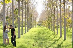 Love the look of them off to the side of this aisle of trees.