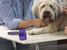 The brush is an important kit for Dog Grooming. This brush can be used to take care of dog coats. Since the coats of Lhasa Apso breed dog are too long so lose hair get trapped inside the deep hair. Then brushing is necessary to remove these hairs. Dog Grooming Tips, Dog Grooming Supplies, Poodle Grooming, Pet Supplies, Poodle Hair, Matted Hair, Tangled Hair, Dog Cleaning, Pet Hair Removal