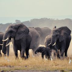 Ninety-six African elephants are killed every day for the ivory trade. The Wildlife Conservation Society's website, 96elephants.org, advocates a worldwide ban on ivory and raises funds to protect herds from poachers.  Via T+L (www.travelandleisure.com).