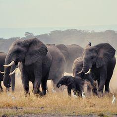 96 Elephants. Via T+L (www.travelandleisure.com).