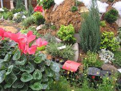 Christmas Fairy Gardens: Grand Scale Gardens