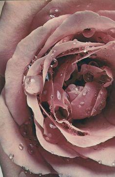 Dusty rose ✿⊱╮