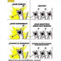 - Кто мы? - Коты! - Чего мы хотим? - Чтобы хозяева нас гладили! - Когда мы этого хотим? - Тогда, когда они заняты чем-нибудь важным! #кошки #котики #кошка #кот #gato #gatos #gatito #gatitos #cat #cats #like #megusta