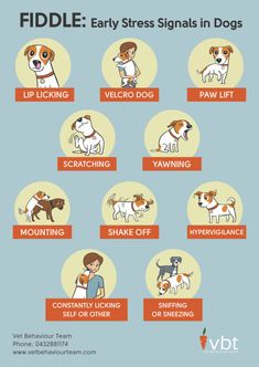 Help your dog overcome negative behavior patterns with these Natural Dog Anxiety Treatments you can do at home using gentle training and essential oils. Dog Care Tips, Pet Care, Dog Body Language, Dog Information, Dog Anxiety, Dog Facts, Old Dogs, Dog Training Tips, Potty Training