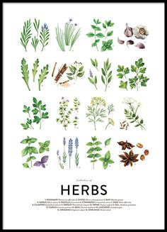 Culinary herbs, posters in the group Posters & Prints / Sizes / 50x70cm | 19,7x27,6 at Desenio AB (8589)